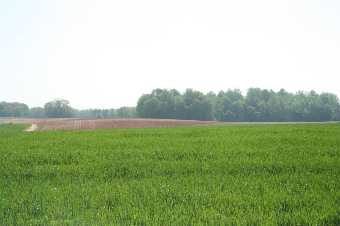 abbotts-creek-wheat-field