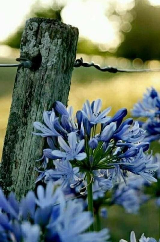 flowers1 (2)
