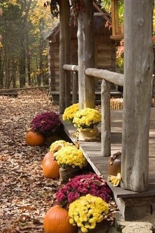 mums and log cabin